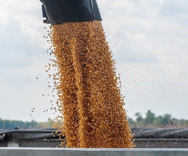 corn-3779308_640